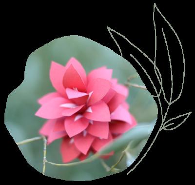 fleur-header_accueil